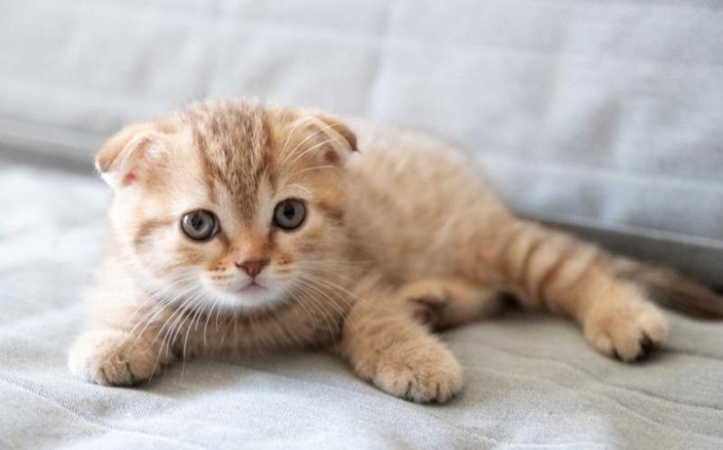Evde Bakmak İçin Yavru Kedi Sahiplenin