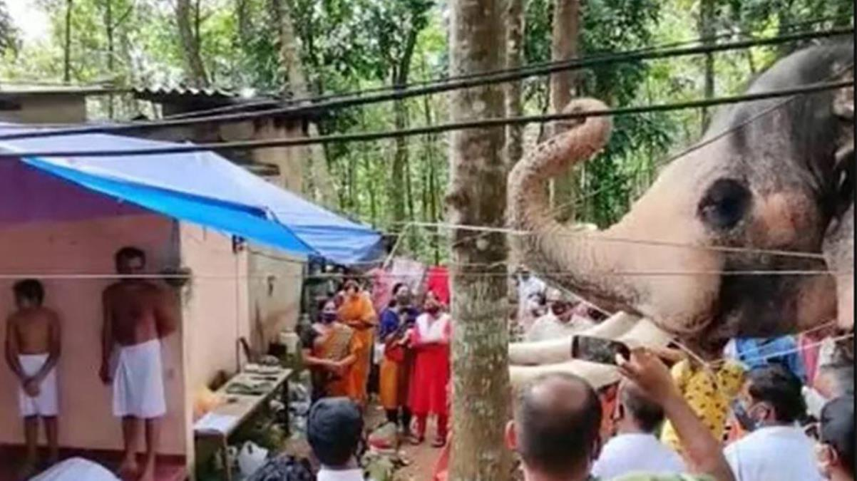 Hindistan'da ölen bakıcısını son kez görmek isteyen fil 24 kilometre yol yürüdü