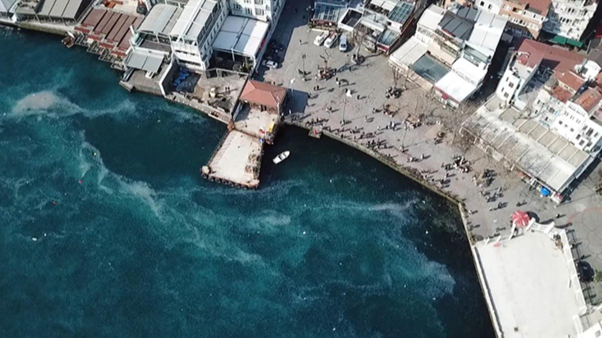 İstanbul Boğazı'nda denizanası istilası! Tüm kıyı şeridi beyaza büründü