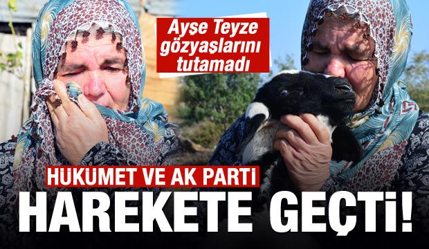 Koyunları çalınan Ayşe Teyze'ye destek yağıyor!