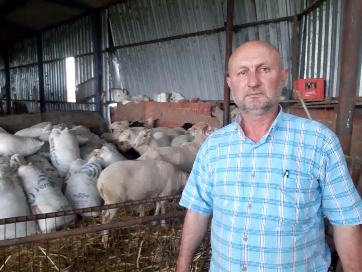 Küçükbaş hayvan üreticileri yapağı fiyatları arttırılmazsa eylem yapacak