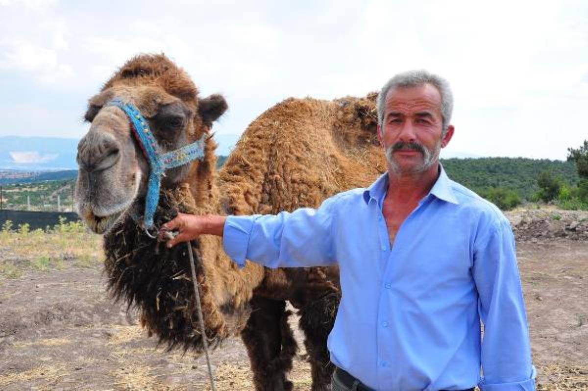 Şampiyon dövüşçü deve kurban için 40 bin liradan satışa çıktı