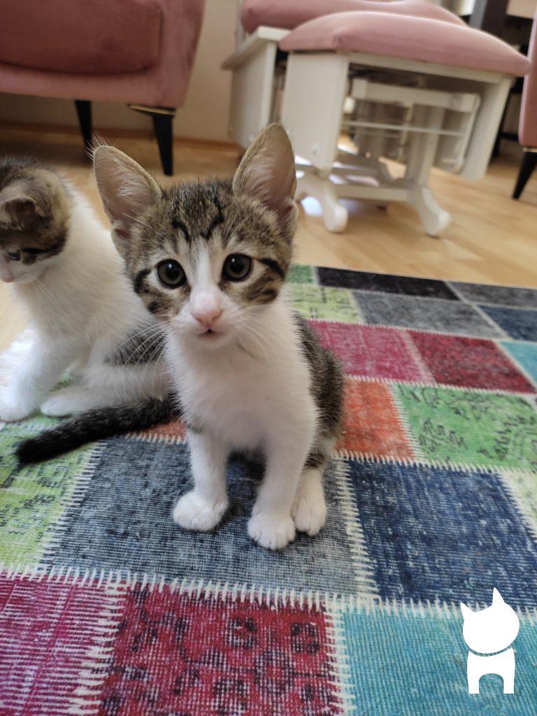 Ücretsiz Kedi Sahiplenme Burda