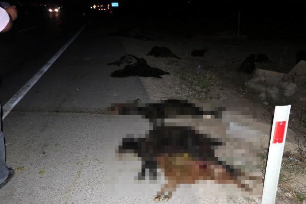 2 otomobil ile 1 TIR'ın çarptığı 23 küçükbaş öldü