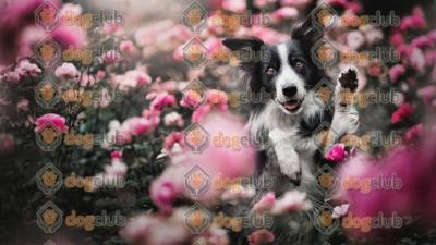 Antalya Köpek Eğitimi Nerden Alınır