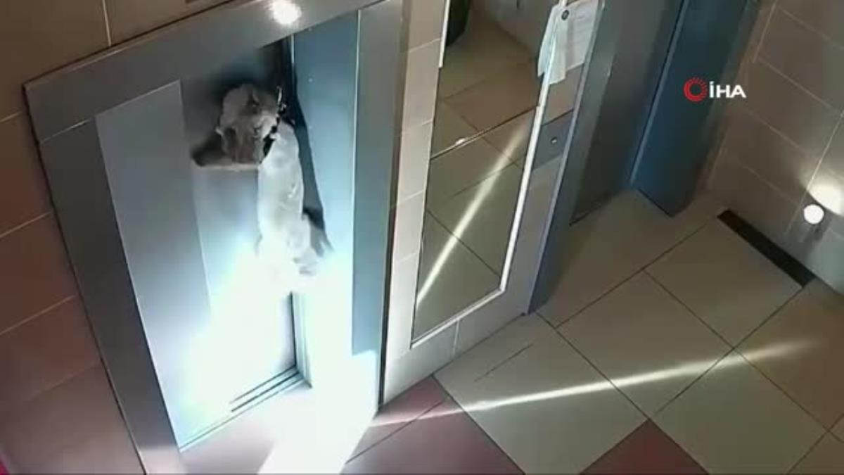Asansör kapısına sıkışan köpeği apartman sakini kurtardı