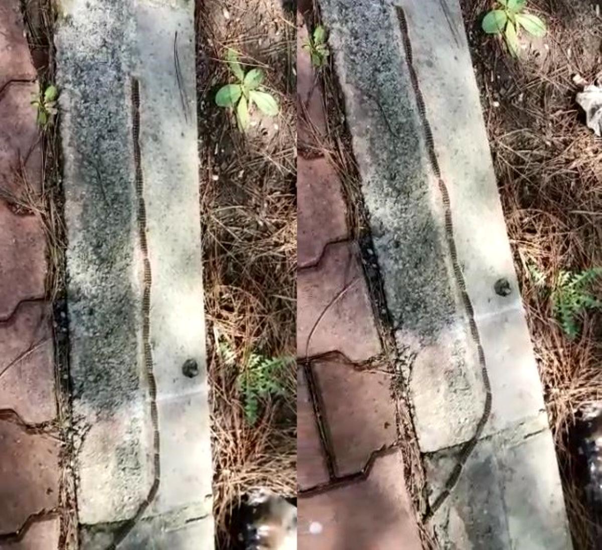 Bu da tırıl konvoyu: Görenler yıllan zannetti