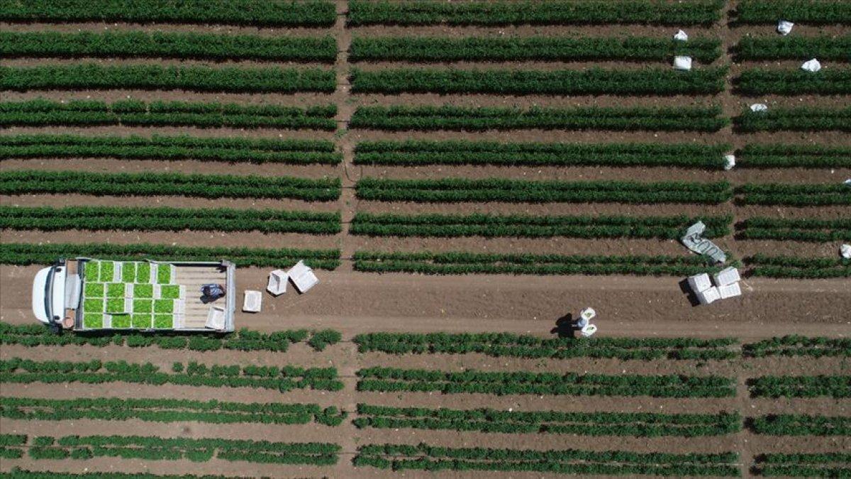 Çiftçiler 'model üretim'le daha fazla verim alıyor