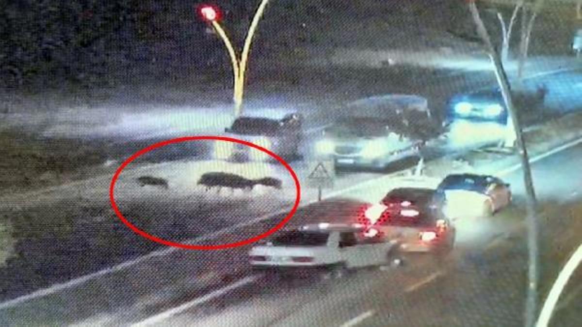 Domuzlara çarpmamak isteyen 4 araç birbirine girdi kaza kamerada
