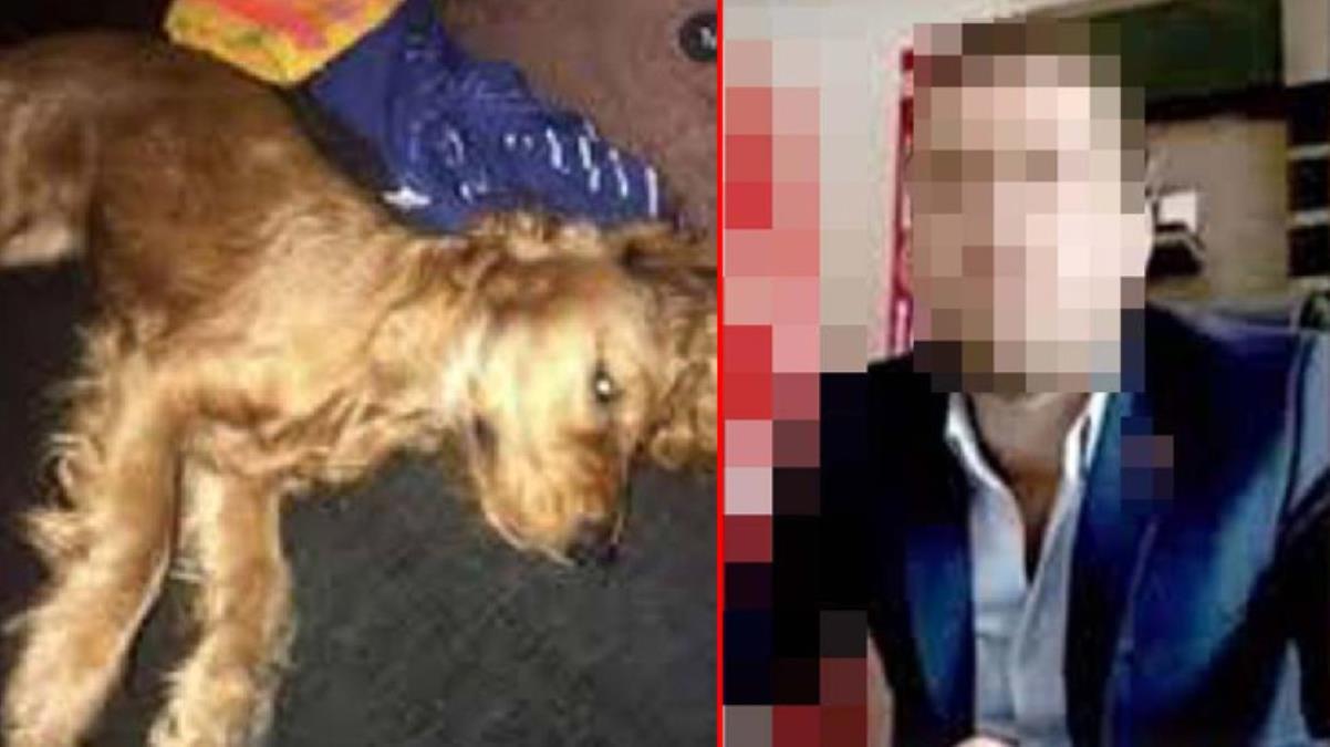 Emanet edilen köpeğe cinsel istismar suçuna 'sahipli mala zarar vermek'ten iddianame hazırlandı