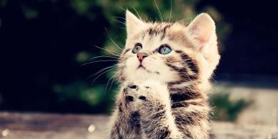 Evde Kedi Nasıl Beslenir ? Bakımları Nasıl Yapılır ?