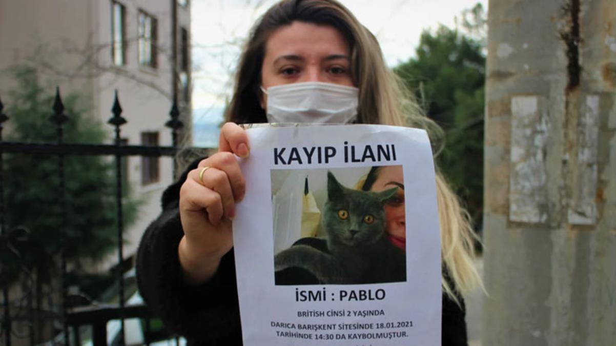 Gece gündüz demeden sokak sokak arıyor! Genç kadın kedisini bulana 1500 TL ödül verecek