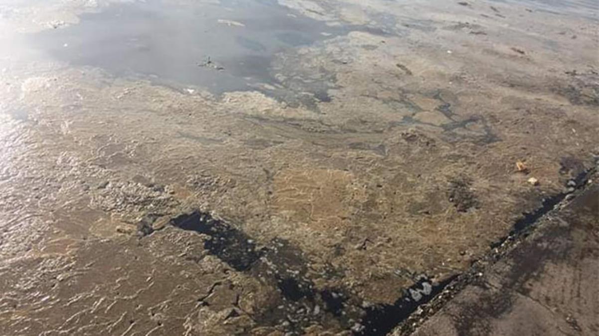 İzmit Körfezi'nde tedirgin eden görüntünün nedeni alg patlaması çıktı