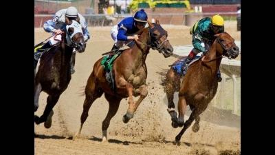 Kaliteli At Yarışı Tahminleri Hizmetleri