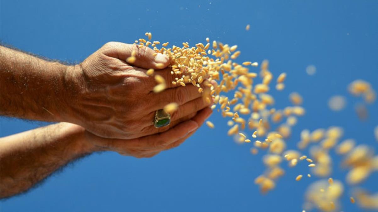 Konya Havzası'nda yaşanan kuraklık nedeniyle un, buğday ve hayvan yemi fiyatlarında artış bekleniyor