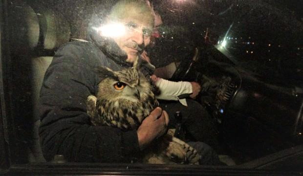 Nadir görülen Puhu kuşunu yaralı buldu