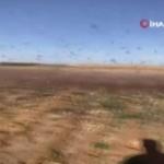 Suudi Arabistan'ı çöl çekirgeleri bastı