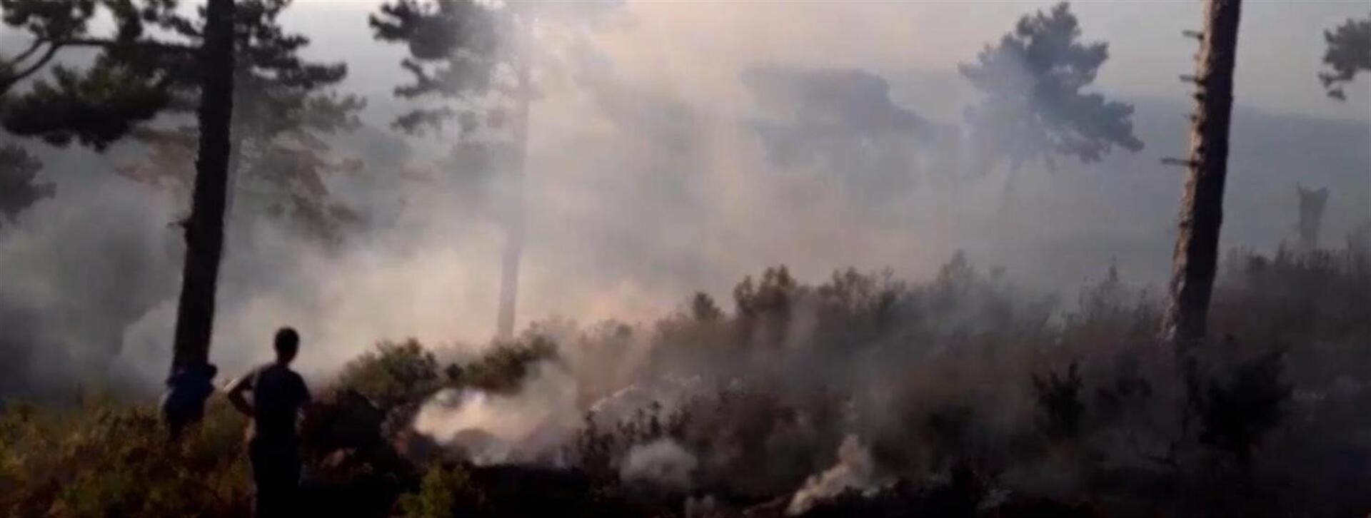 Tarım ve Orman Bakanı Bekir Pakdemirli'den, orman yangınları açıklaması