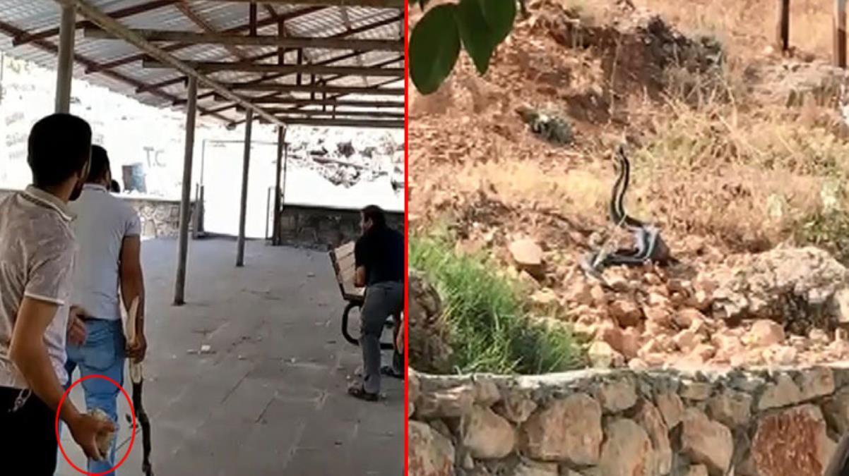 Tek şehir iki farklı görüntü: Bir tarafta yılanla sohbet ettiler, diğer tarafta taşladılar