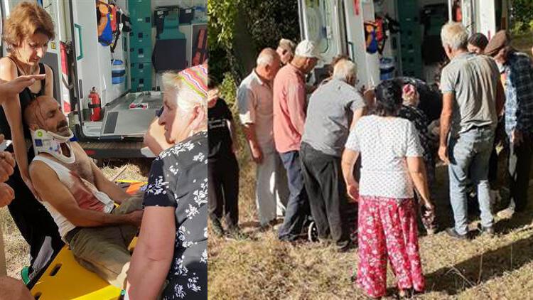 Tunceli'de ayı saldırısı! Köylüler fark etti...